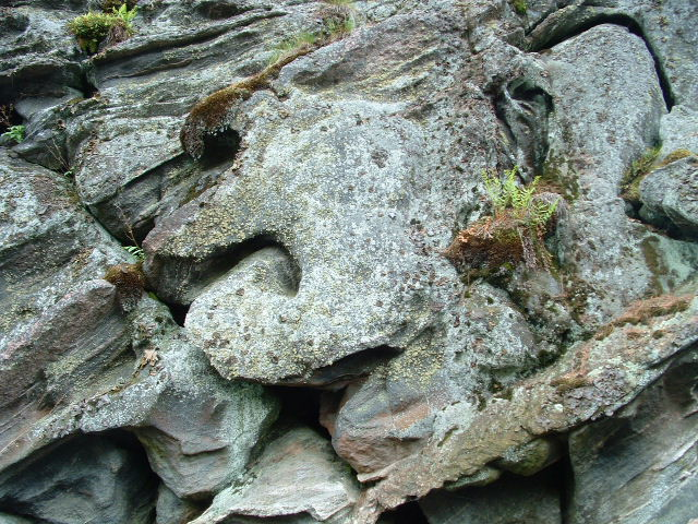 A little bit of hardy growth in the folded rock of  the Precambrian Shield - Northern Ontario