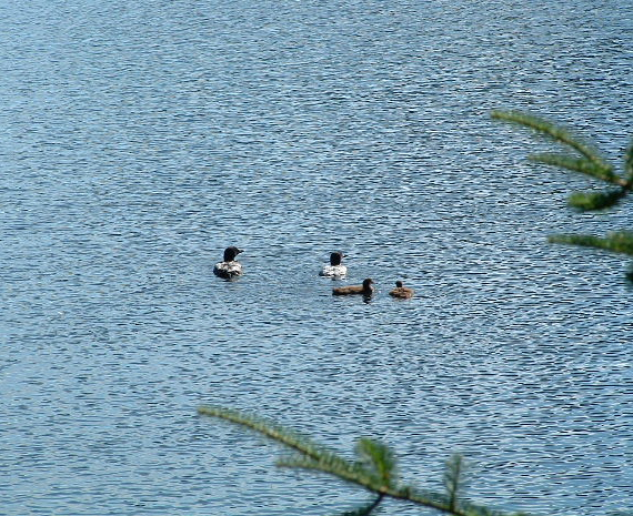Portage Lake 019